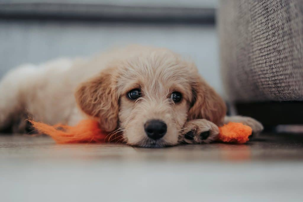 The Government Has Introduced A New Model Tenancy Agreement, Giving Renters The Right To Have Pets