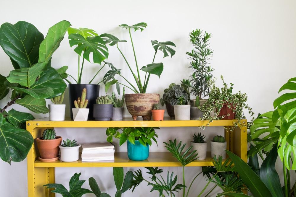 house-plants-lockdown-stress