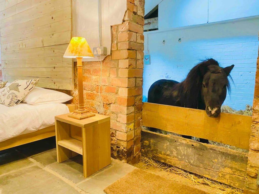 miniature-horse-norfolk-airbnb
