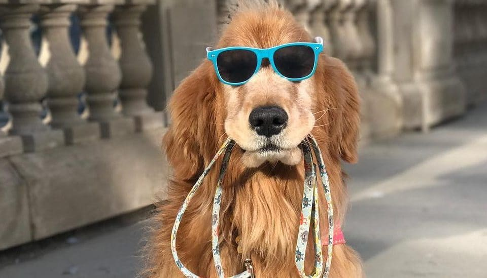 Chicago's Self-Walking Dog Brings Smiles to the Loop