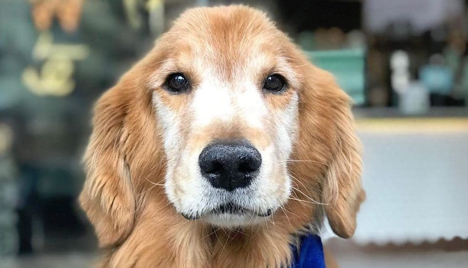 Sporty, Chicago's Favorite Self-Walking Dog, Died This Week