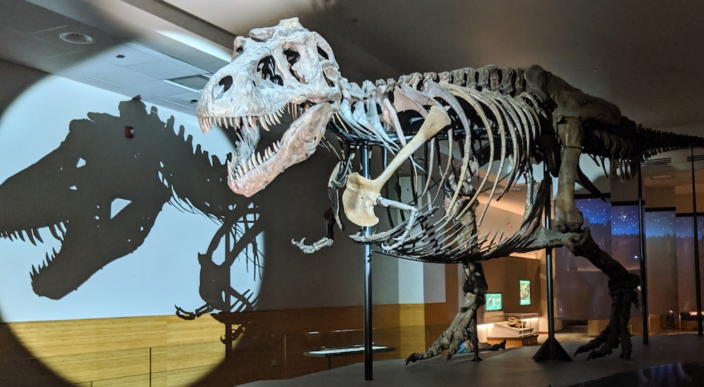 Inspired By Shedd Aquarium Penguins, Sue The T-Rex Explores Field Museum's Exhibits Too