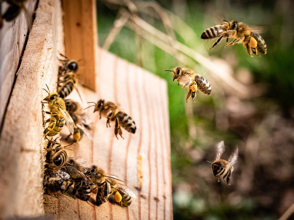Chicago's Only Meadery Raises Its Own Bees In Hives Around The City