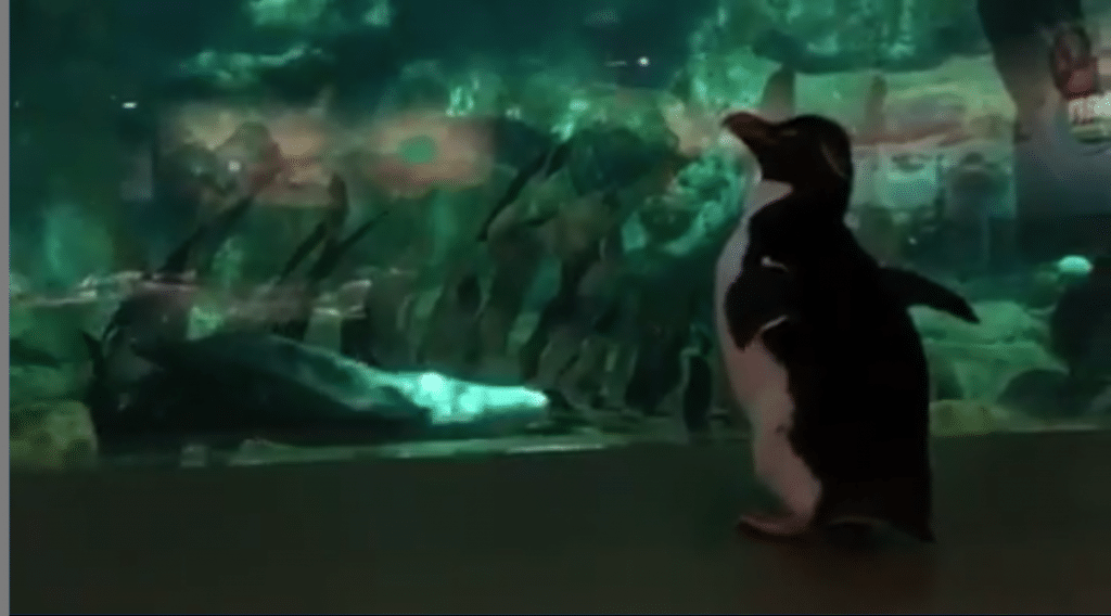 Penguins And Otters Got To Hang Out Today Since The Shedd Aquarium Is Closed