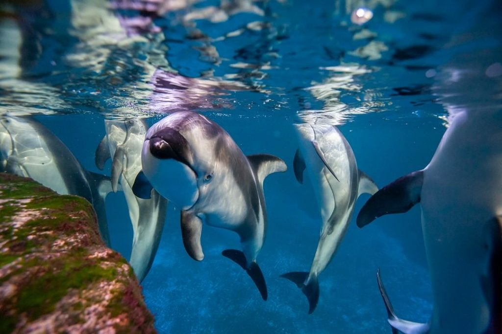 Shedd Aquarium Temporarily Closes But Will Post Cute Animal Pics Requested By Twitter Followers