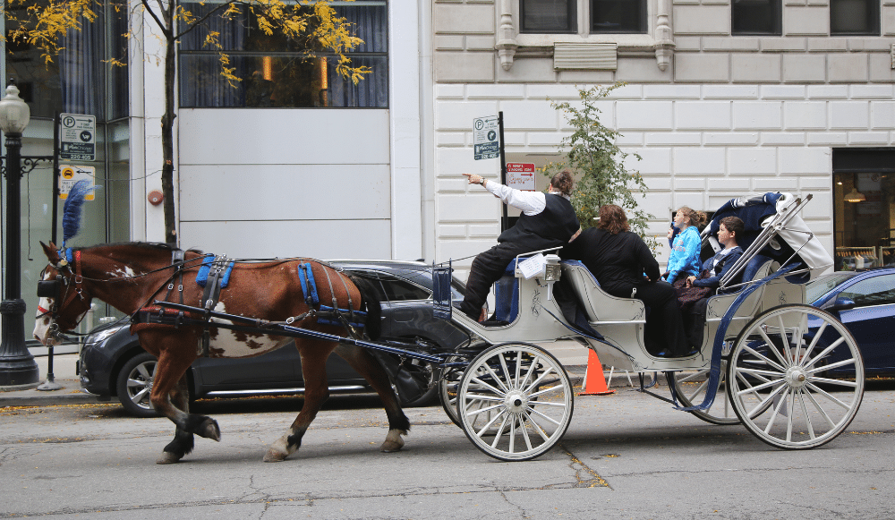 Horse-Drawn Carriages Will Soon Be Illegal In Chicago