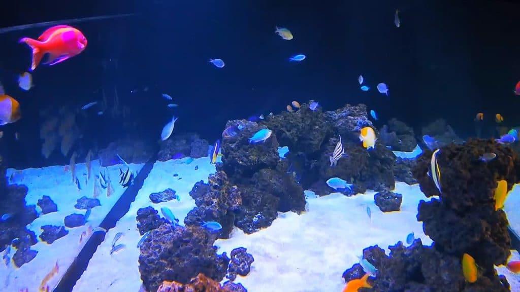Watch Dazzling Underwater Beauty Flourish In Shedd Aquarium's Live Cam