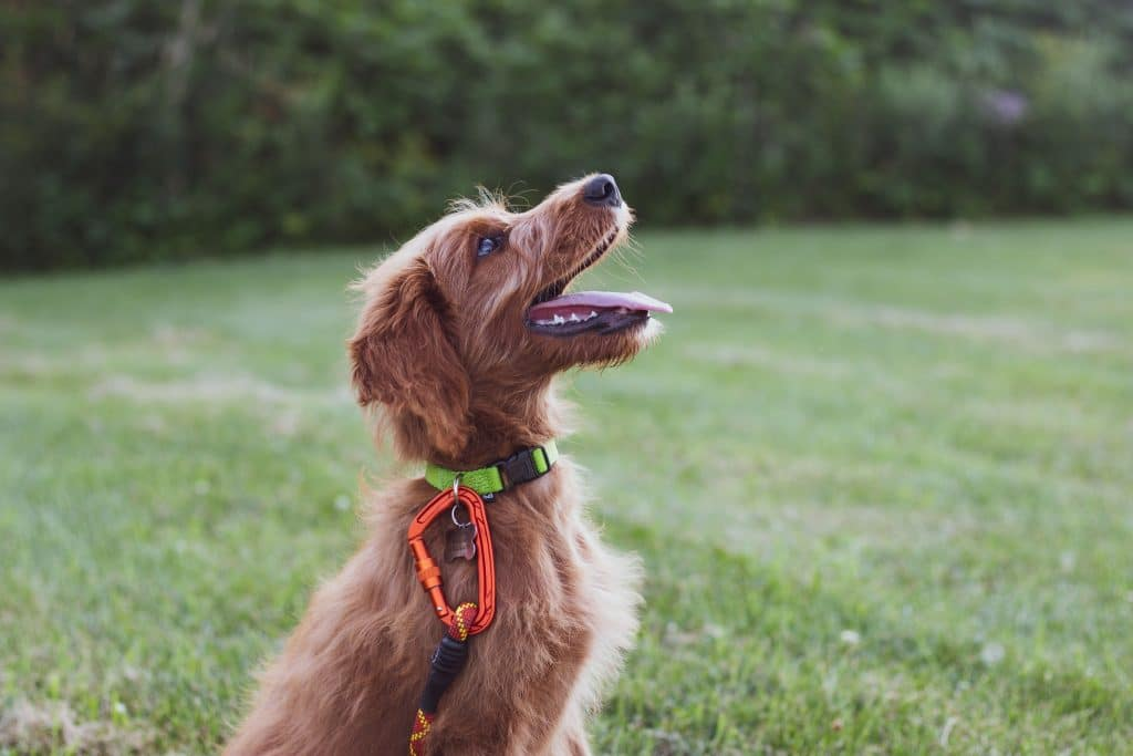 Give Your Dogs The Bonding And Education They Deserve From These Online Dog Training Courses