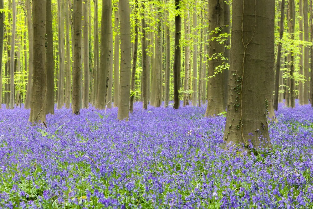 Wander Through Fields Of Bluebells With The National Trust's Soothing New Video