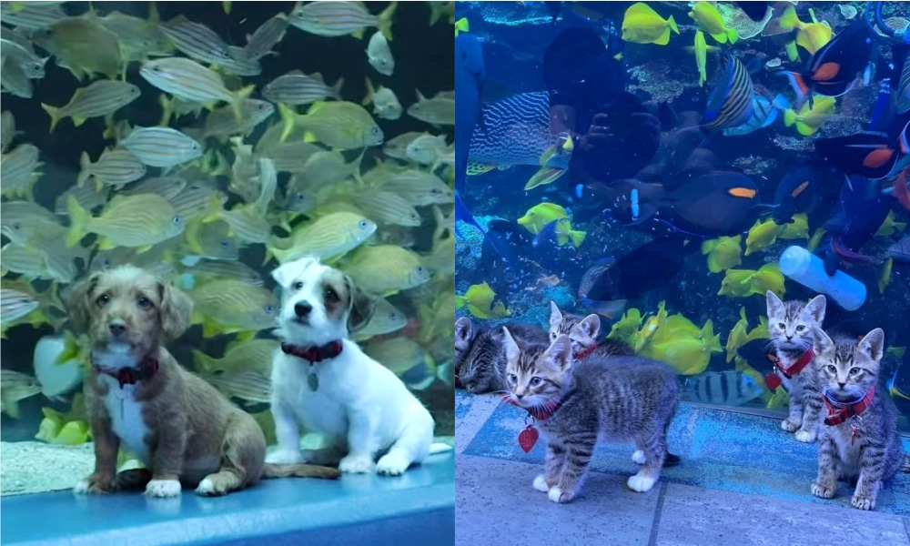 Adorable Foster Puppies And Kittens Explore Aquarium After It Closes To The Public