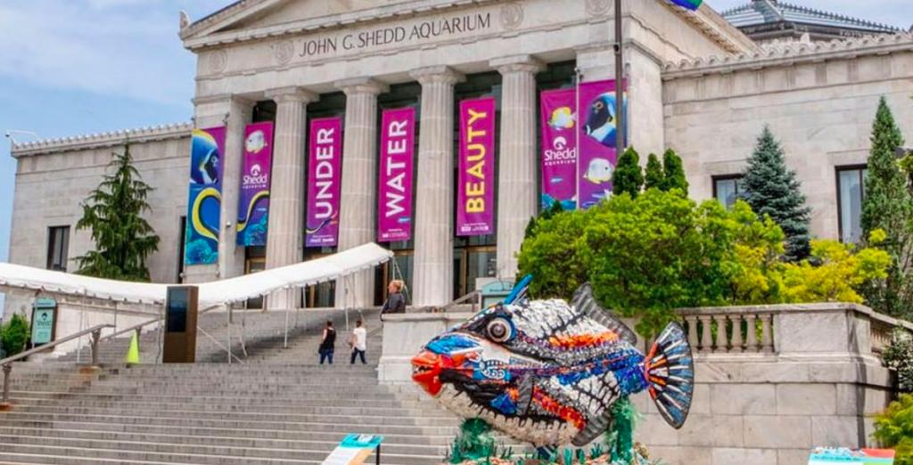 Shedd Aquarium Announces Full Week Of Illinois Resident Free Days Starting Monday