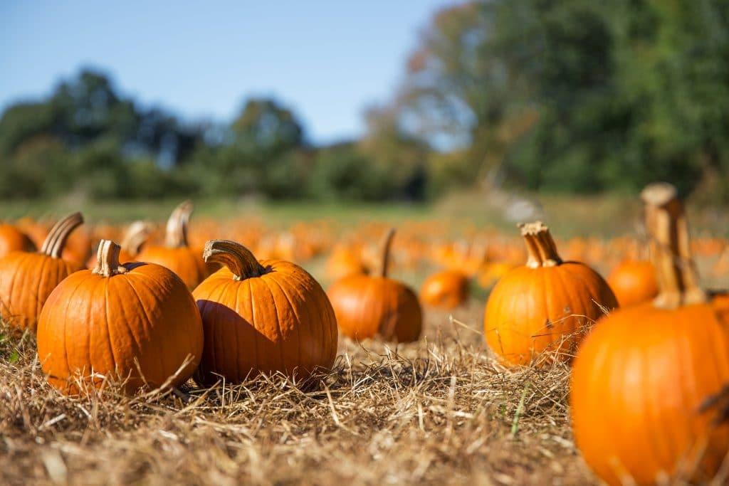 10 Of The Best Pumpkin Patches Around Chicago