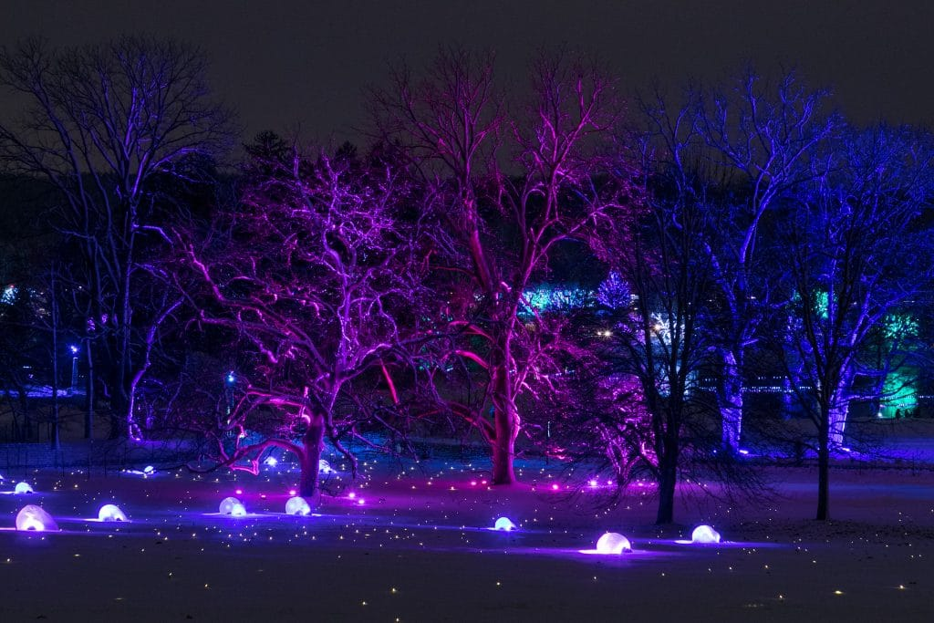 Lights And Laser Technology Will Light Up The Morton Arboretum This November