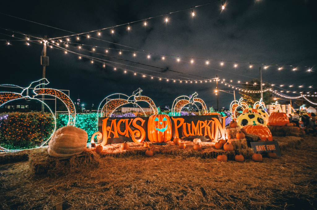 A Pumpkin Paradise Has Cropped Up In Central Chicago • Jack's Pumpkin Patch