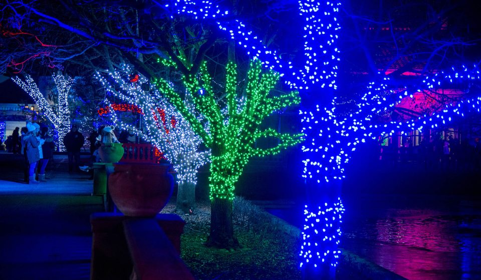 Chicagoland's Largest Lights Festival Returns To The Gigantic Brookfield Zoo