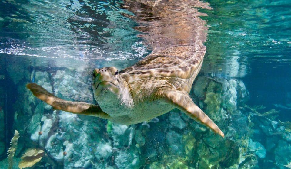 Chicago's Beloved Shedd Aquarium Has Closed Until 2021 Amid COVID Wave