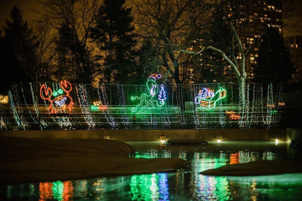 ZooLights Will Light Up Lincoln Park This Year With $5 Tickets And 5 Free Nights