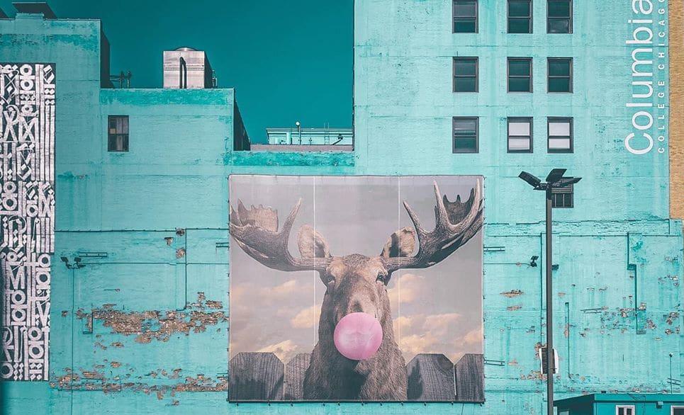 Moose Bubblegum Bubble By Jacob Watts