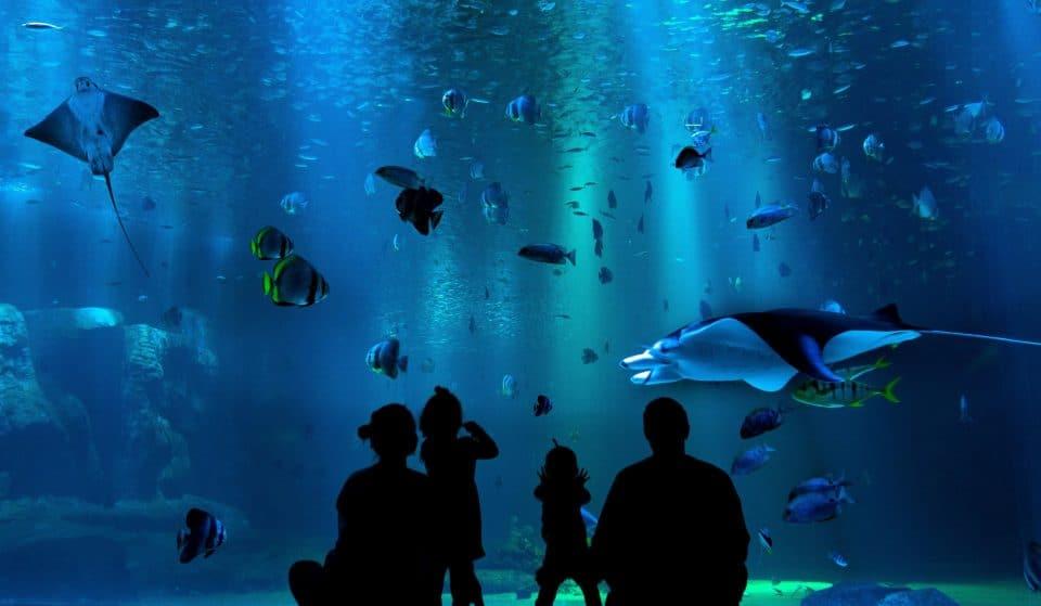 Shedd Aquarium Will Reopen Its Doors To The General Public Next Week