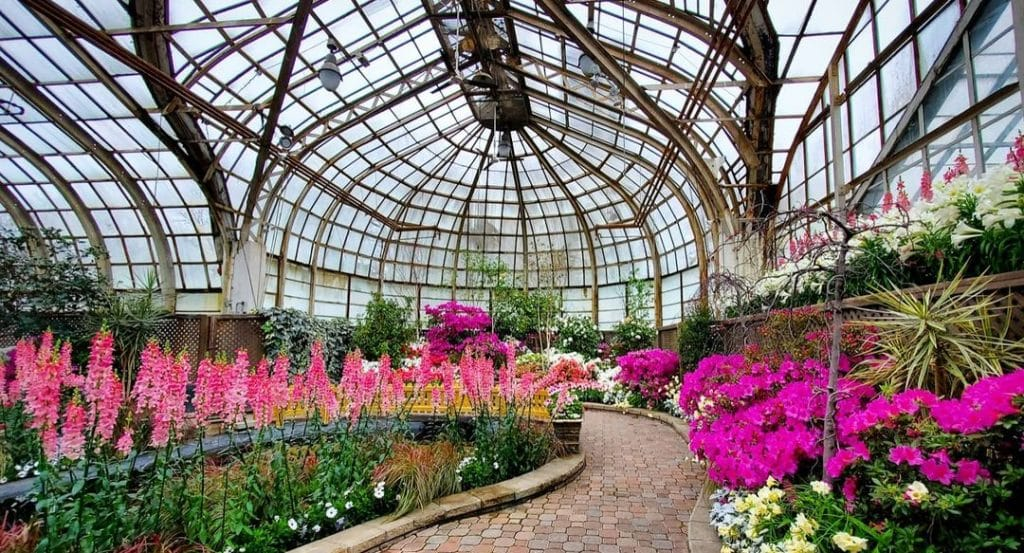 """Lincoln Park Conservatory Will Bring Spring Flower Show """"Pretty In Pink"""" To A Close On Mother's Day"""