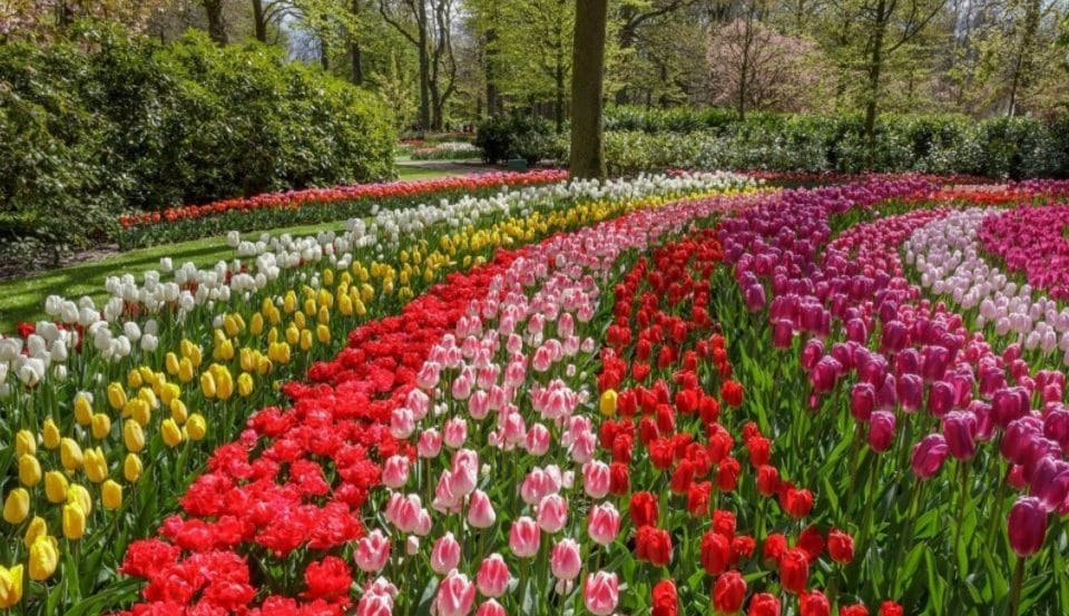 The Netherlands' Breathtaking Tulip Fields Are In Full Bloom, And You Can Explore Them Virtually