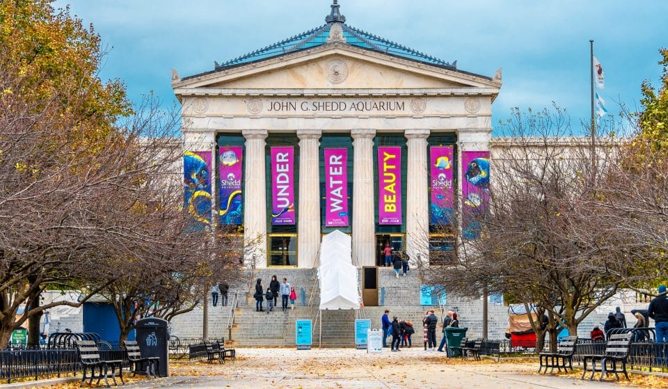 Shedd Aquarium And Chicago's Museums Will Stay Open Extra Late Friday To Celebrate The Full Reopening
