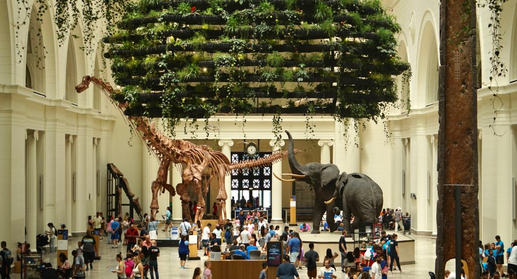 Chicago's Field Museum Will Be Free For Illinois Residents Every Wednesday Of September