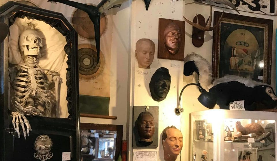 Browse An Eerie & Eclectic Mix Of Bizarre Bric-A-Brac At Andersonville's Creepy Curiosity Cabinet