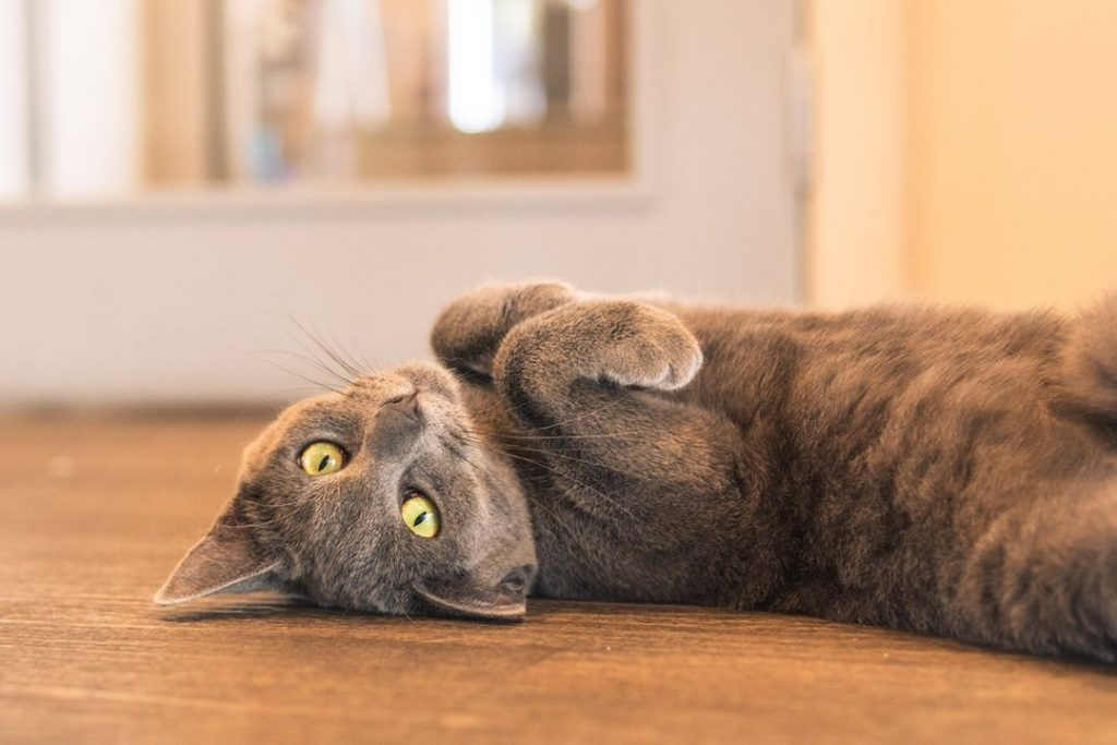 Visit Some Beautiful Cats And Have A Coffee At Christchurch's Only Cat Café • Catnap Café