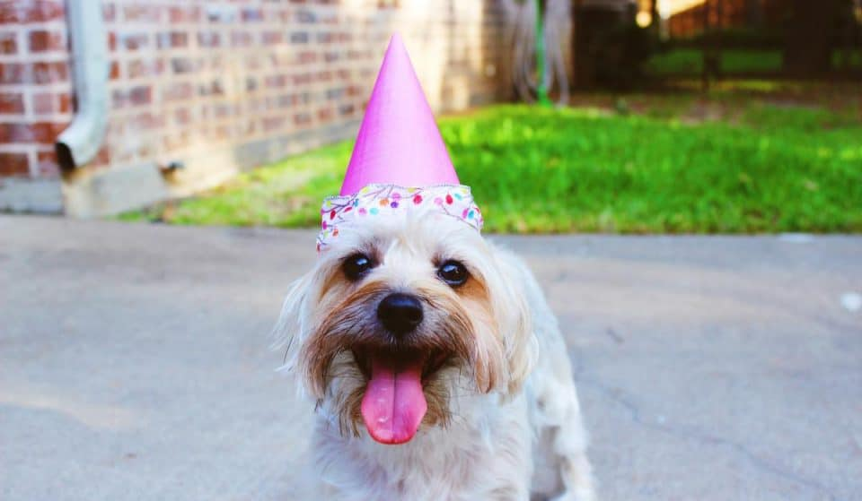 Celebrate Your Dogs Birthday In Christchurch With Cakes From These Epic Pet Bakeries