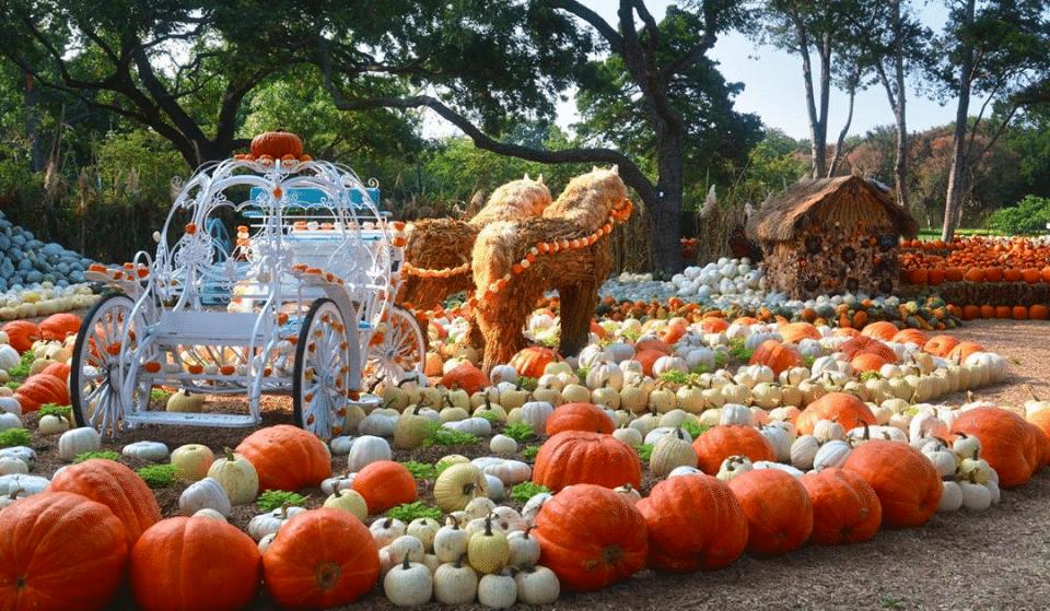 Stroll Through The Enchanting Pumpkin Garden At The Dallas Arboretum