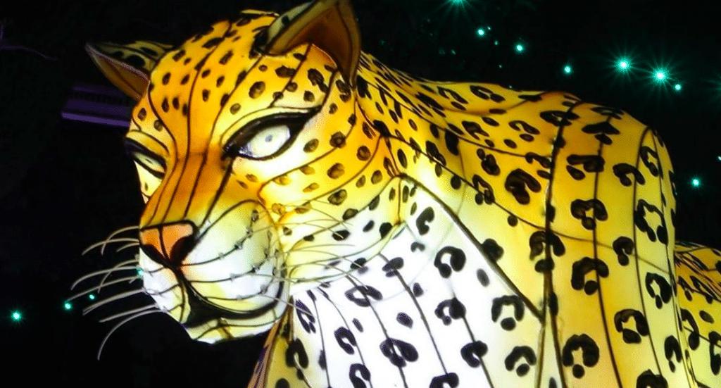 Dallas Zoo Lights Returns This Season As A Drive-Thru Experience