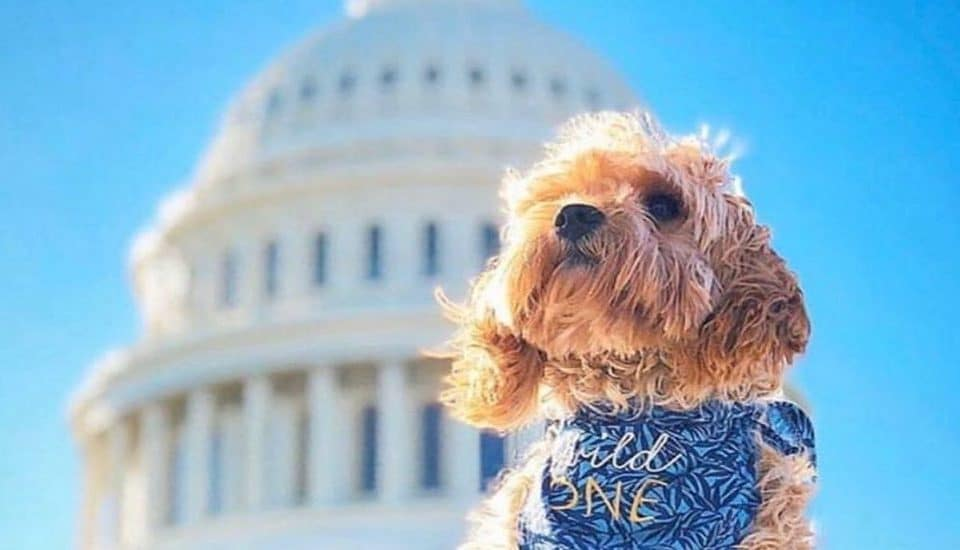 14 Photos Of Dogs At DC Monuments That Will Brighten Your Day