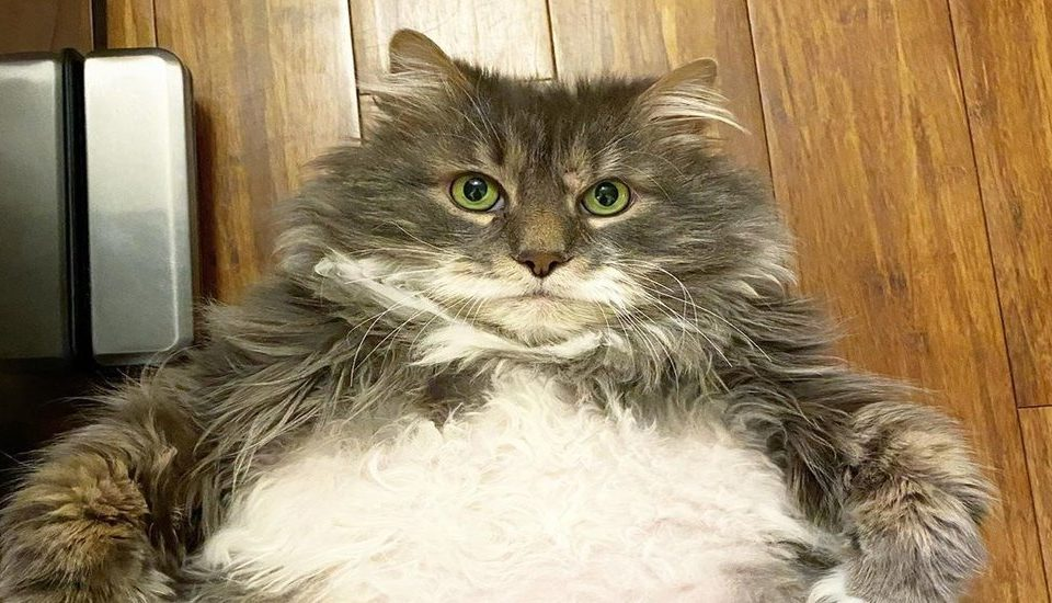 This Chonky Feline Is Looking For His Forever Home