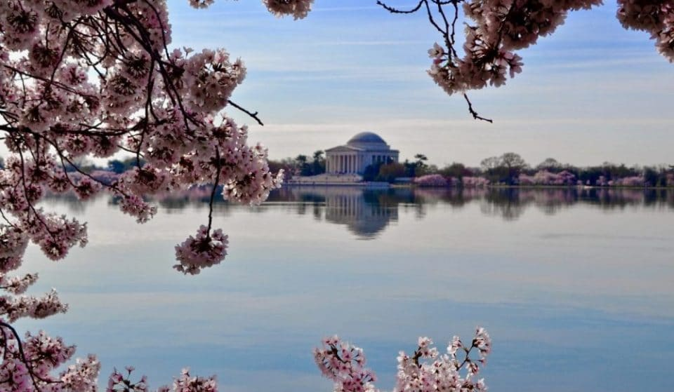 Major Roads Around National Mall Close To Restrict Access To Tidal Basin