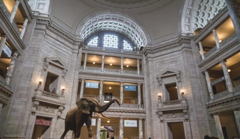 18 DC Museums You Can Visit From The Comfort of Your Own Home