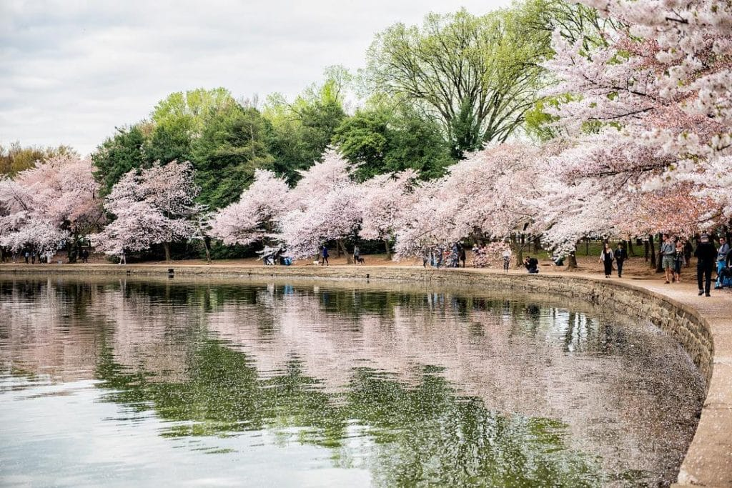 10 Stunning Spots In Which To Admire The Cherry Blossoms This Season Secret Dc