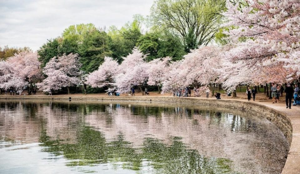 10 Stunning Spots In Which To Admire The Cherry Blossoms This Season