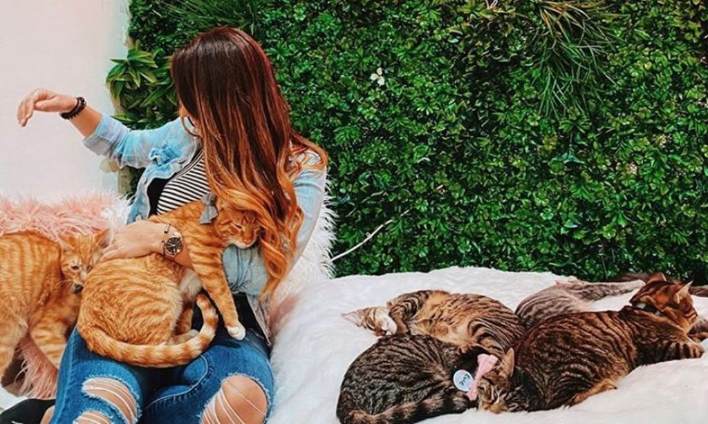 This Georgetown Cat Café Is Absolutely Purrfect • Crumbs & Whiskers