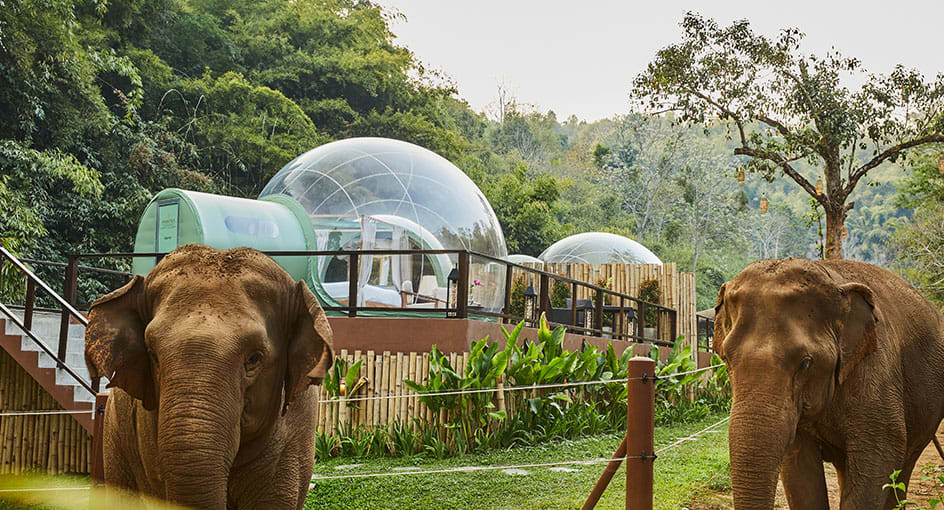Thailand Has 'Jungle Bubbles' For Visitors To Sleep Among Elephants