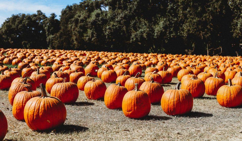 7 Of The Best Pumpkin Patches Around DC