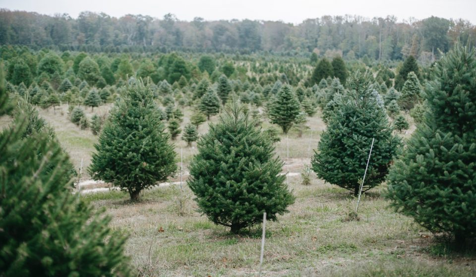 7 Places In Which To Get Your Christmas Tree In DC