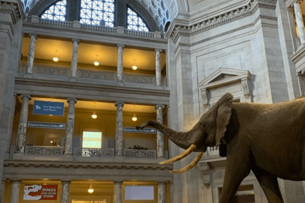 Guide To All The Museums Reopening This Week In DC