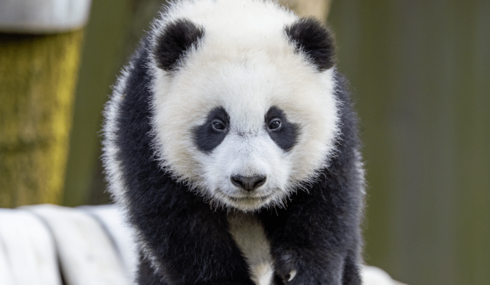 The National Zoo Is Reopening This Friday