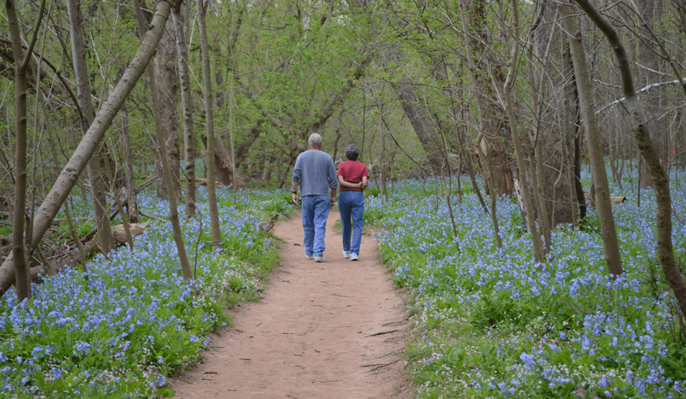 This Enchanting Trail Has Bluebells Galore