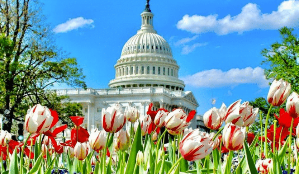 10 Splendid Things To Do In DC This June