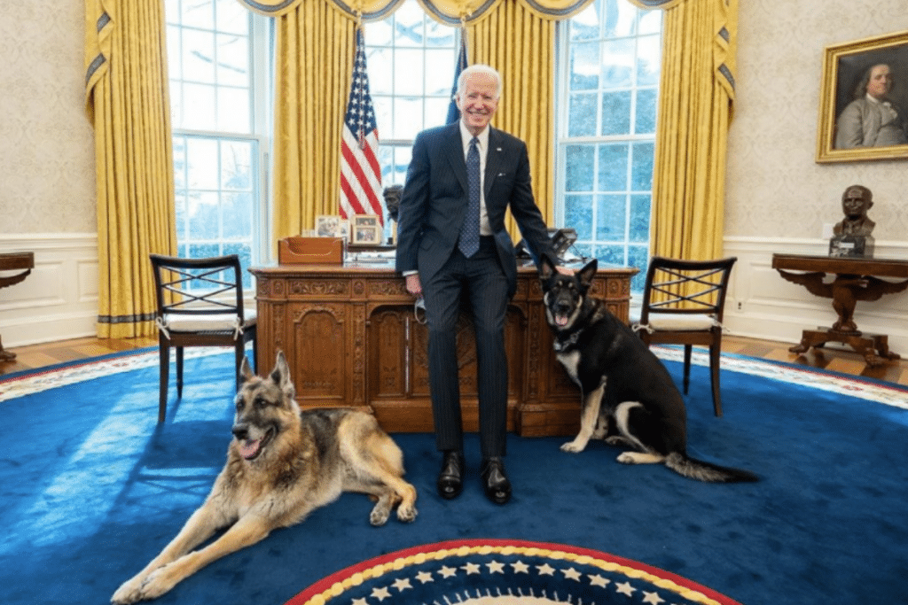 President Biden's Dog Champ Passed Away Over The Weekend
