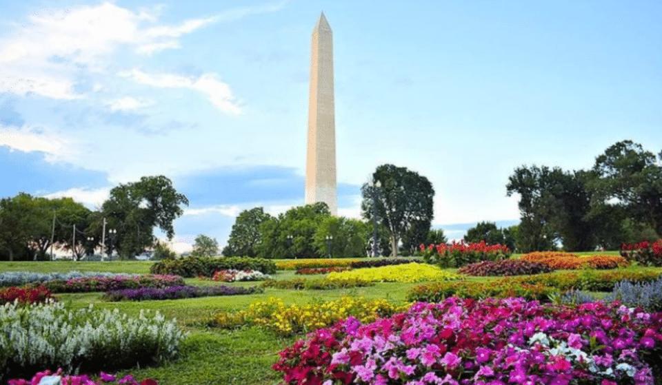 7 Must-Visit Flourishing Botanical Gardens In DC