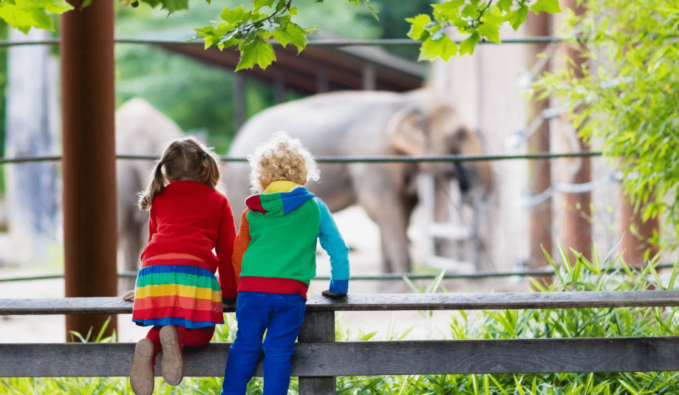 12 Things To Do With Kids During The Summer In DC