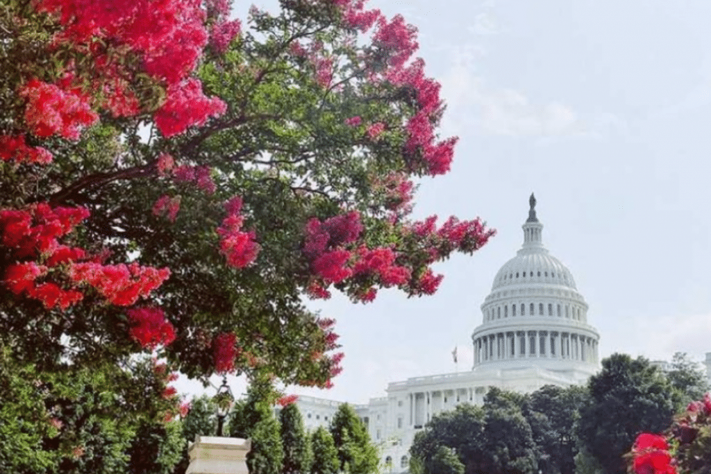 10 Fantastic Things To Do In DC This August